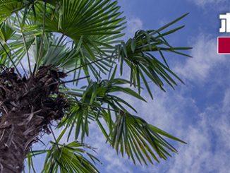 家庭用品産地 海南エリアの現況を探る